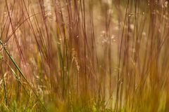 Abstract wild grass pattern Stock Photo