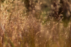 Abstract wild grass pattern Stock Image