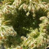 Abstract wild worteldetail Stock Afbeeldingen