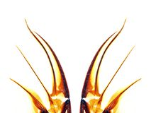 Abstract wings of insect Royalty Free Stock Image