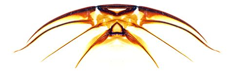 Abstract wings of insect royalty free illustration