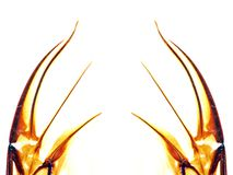 Abstract wings of insect Royalty Free Stock Photo