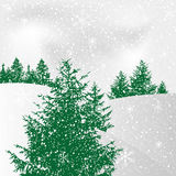 Abstract winter background. With pine Stock Photo