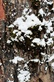 Abstract winter background of snow and bark of a tree. 1 Royalty Free Stock Images