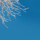 Abstract Winter Background - snow covered icy white branches Royalty Free Stock Image