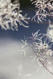 Abstract winter backgrounds wit foliage Stock Photo