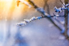 Abstract winter close-up. Snowing and soft sunlight. Winter closeup landscape background. Snowing scene and sunset sunlight Royalty Free Stock Image