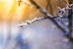 Abstract winter close-up. Snowing and soft sunlight. Winter closeup landscape background. Snowing scene and sunset sunlight Royalty Free Stock Photography