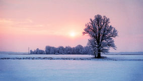 Abstract winter sunrise landscape with a lonely tree and colorful sky. royalty free stock photo