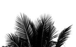 Abstract wit en zwart kokosnotenblad op witte achtergrond Stock Foto's
