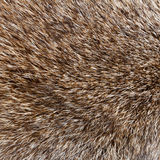 Abstract wolf  fur background Royalty Free Stock Photography