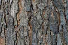 Abstract wood bark texture Royalty Free Stock Images