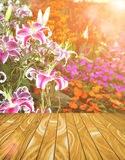 Abstract Wood Plank and Nature Background Stock Images
