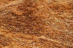 Wood shavings close up. Abstract wood shavings close up royalty free stock photography