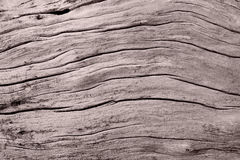 Abstract wood texture Stock Images