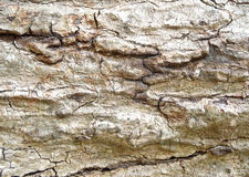 Abstract wood texture bark Stock Photos