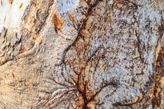 Abstract wood texture bark Royalty Free Stock Photo