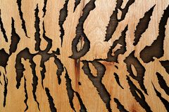 Abstract wood texture like tiger pattern Stock Image