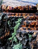 Abstract wood. A tree stump with moss growing on the side stock photos