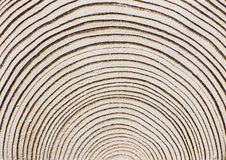 Abstract Wooden Background. Wood Rings. Abstract Wooden Background Royalty Free Stock Images