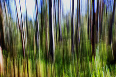 Abstract of woodland. In the Hunter Valley, Australia stock photos