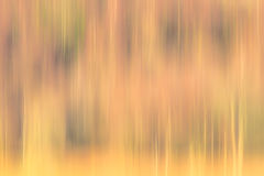 Abstract woodland texture Stock Image