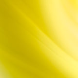 Abstract yellow curves background Royalty Free Stock Images