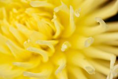 Abstract yellow floral defocus background. Macro photography. fine art. Floral yellow blurred background with macro delicate flower abstract picture. Beautiful stock photos