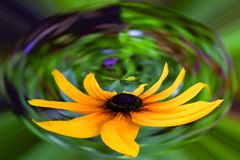 Abstract, yellow flower in capsule on green background stock photography