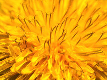 Abstract yellow flower macro. An almost abstract macro shot of a yellow flower stock image