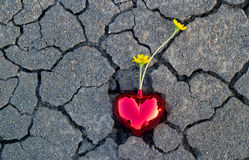 Abstract yellow flowers in red heart shape on crack ground nature Stock Images