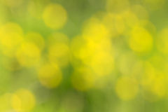 Abstract yellow green blurry nature bokeh background Royalty Free Stock Images