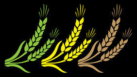 Abstract yellow green brown wheat 1. Abstract picture of gold wheat Royalty Free Stock Photography
