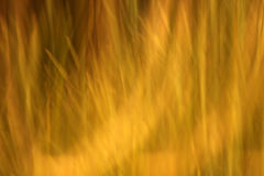 Abstract yellow and green lines. A soft-focus abstract of colorful yellow and green grasses. May be used as a background Royalty Free Stock Images