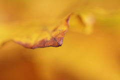 Abstract yellow leaf background Stock Photo