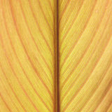 Abstract yellow leaf lines background texture Royalty Free Stock Image