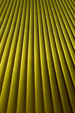 Abstract yellow lines Stock Photos