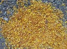 Abstract yellow petals on asphalt, environment, Royalty Free Stock Photos