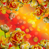 Abstract yellow red background of tulips. Abstract background of yellow, red and white tulips.Flowers wallpaper royalty free stock photo