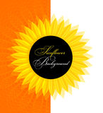 Abstract yellow sunflower. Background illustration Stock Photo