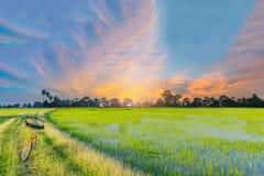 Abstract zacht nadruk semi silhouet de fiets, het groene padiepadieveld met de mooie hemel en de wolk in de avond in Thailand Stock Fotografie