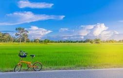 Abstract zacht nadruk semi silhouet de fiets, het groene padiepadieveld met de mooie hemel en de wolk in de avond in Thailand Stock Afbeeldingen