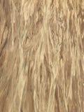 Abstract zand op de Kust van Oregon stock afbeelding