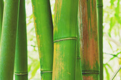 Abstract Zen Bamboo Stock Photography