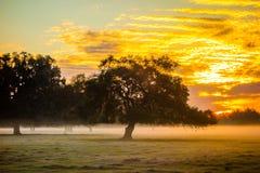 Abstract zonsopganglandschap op het landbouwbedrijf in Florida Stock Afbeelding
