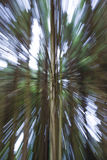 Abstract zoom of trees Royalty Free Stock Image