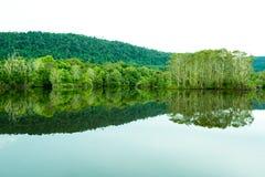 Abstracte aard, bezinning van bomen in meer Stock Fotografie