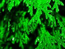 Abstracte aard in groen Royalty-vrije Stock Afbeelding