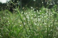 Abstracte aard, groen soort gras, wat in scherpte, rust binnen stock fotografie