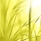 Abstracte aardachtergrond Stock Foto